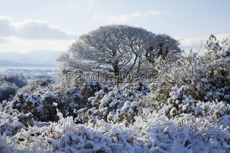bla trae traeer bjerge vinter sky