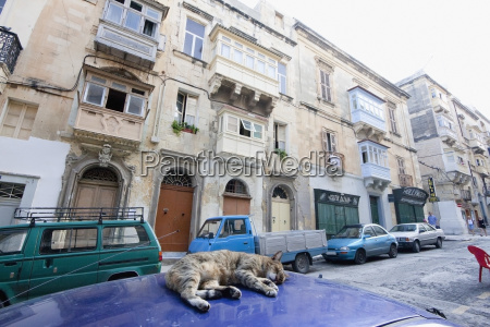 cat sleeping on a parked car
