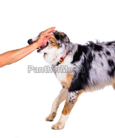 mano animale domestico cane bestiame amico