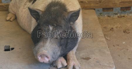 alimento enorme cor closeup industria animal