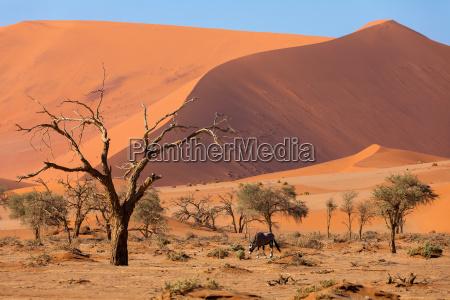 paisagem inoperante de vlei em sossusvlei
