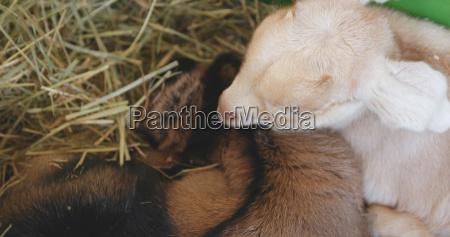 alimento animal mamifero animais agricultura campo
