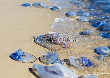 existir vida geleia marinha paisagem natureza