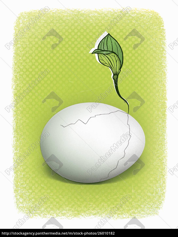 seedling, que, cresce, do, ovo, rachado - 26010182