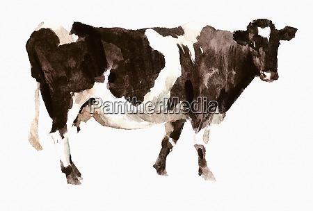 pintura da aguarela da vaca de