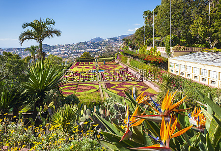 formal garden with bird of paradise