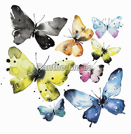 pintura aquarela de diferentes borboletas