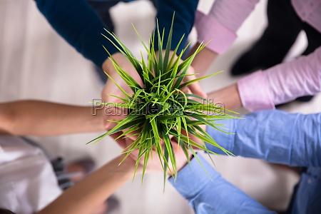 empresarios segurando planta verde