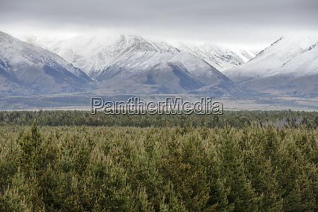 forest by ben ohau mountain range