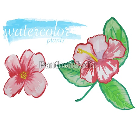 red watercolor flower set