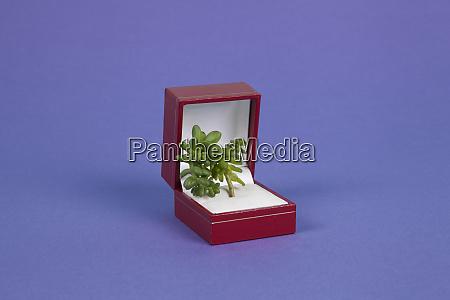 joia da planta turquesa