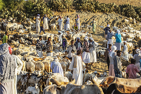 pastores de cabra com suas cabras