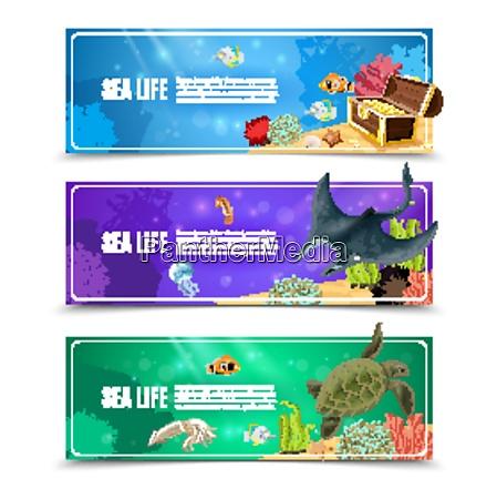 variantes da vida marinha subaquatica e