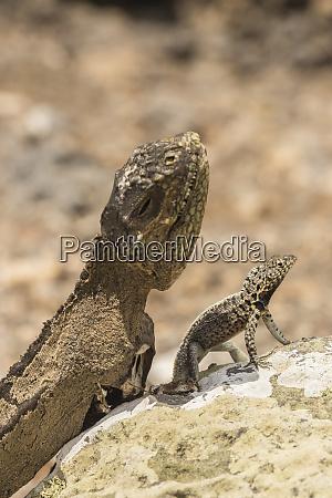 ecuador galapagos national park mummified land