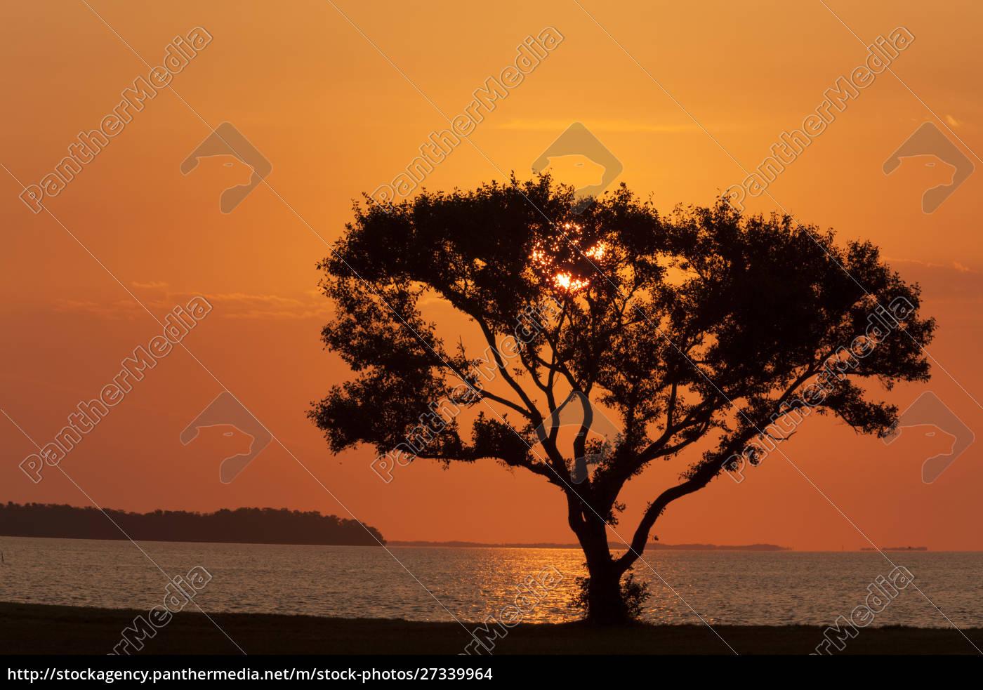usa, , florida, , everglades, national, park, , flamingo - 27339964