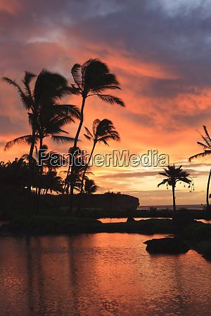 palm trees in silhouettes sunset kauai