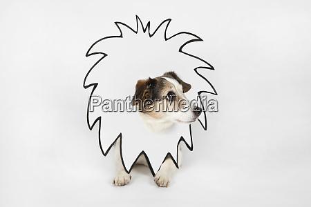 cachorrinho com juda de leao desenhado