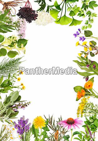 quadro com as principais plantas medicinais