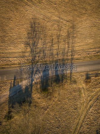 vista aerea das arvores sombra ao