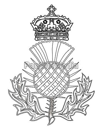 simbolo de cardo da escocia em