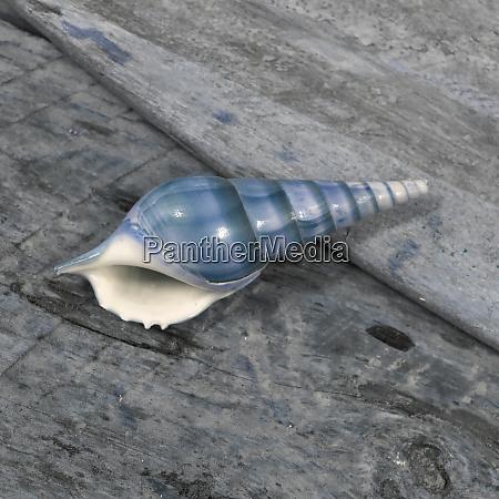 shell, natutical, ainda, vida. - 27887319