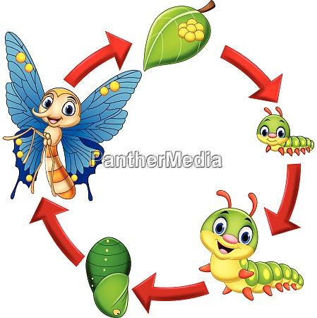 ilustracao do ciclo de vida das