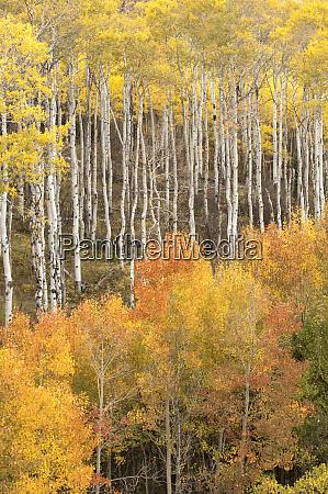 eua colorado cores de outono