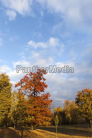temporada de outono