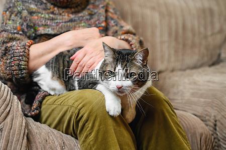 velha irreconhecivel acariciando um gato