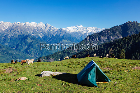 camp in mountains kullu valley himachal
