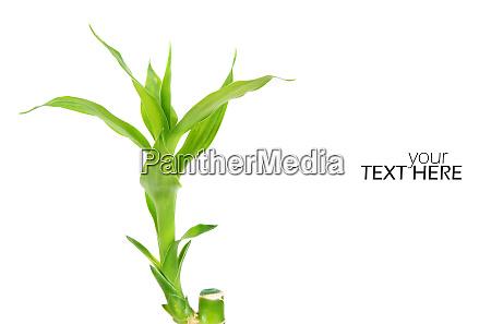 ID de imagem 28617158