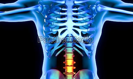 parte lombar das vertebras que apresentam