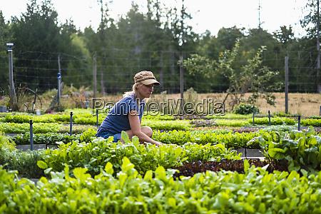 agricultora femea cuidando de plantas vegetais
