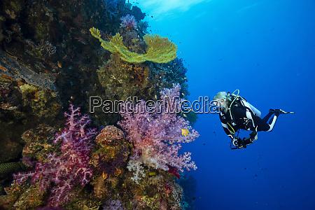 palau canal ulong mergulhador explorando recifes