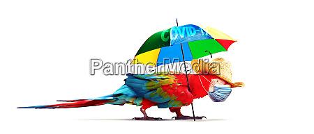 papagaio da arara com mascara medica