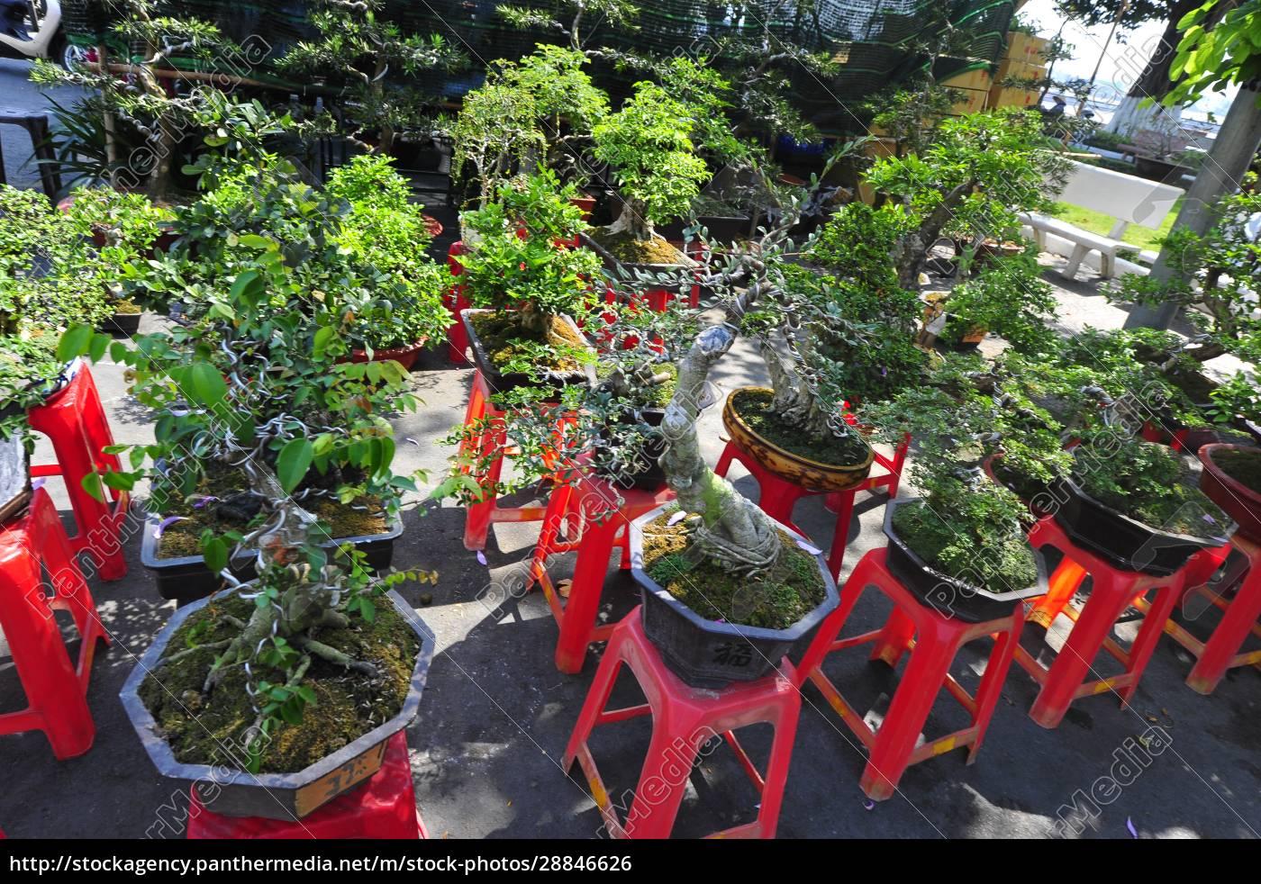 a, cultura, bonsai, no, vietnã - 28846626