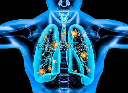 covid 19 virus dentro do corpo