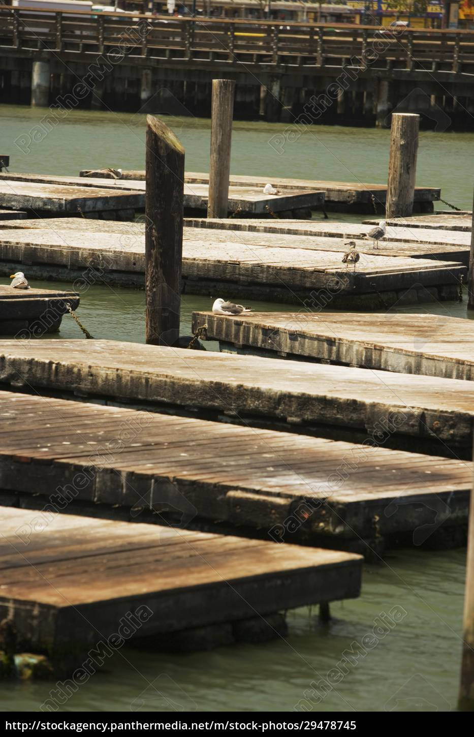 group, of, animals, on, a, pier - 29478745