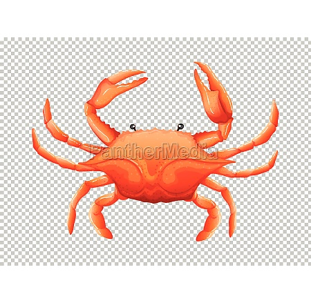 ID de imagem 30273951