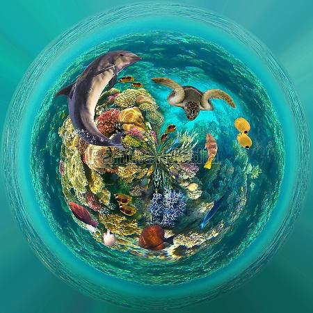 mundo subaquatico peixes de coral do
