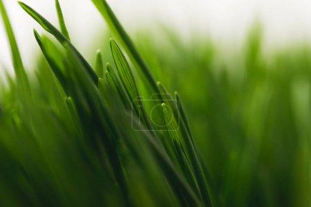 ID de imagem B184854854