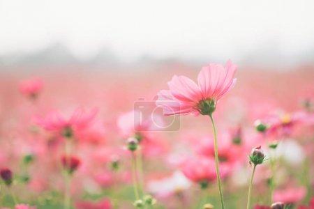 ID de imagem B184588402