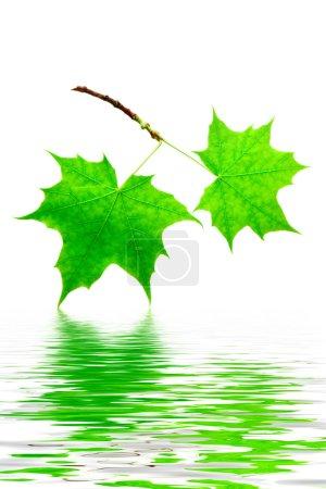 verde, Cor, branco, Contexto, Vibrante, Isolados - B5079346